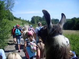 Kinder-Lama-Trekking-Abenteuer im Ruhrgebiet: Kindergeburtstag hoch hinaus mit den Lamas durch den Gesundheitspark in Gelsenkirchen