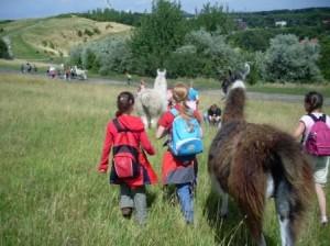 Kindergeburtstage mit Lamas