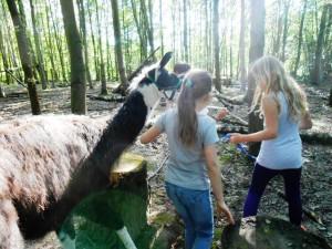 Kindergeburtstage mit Tieren und Abenteuer im Ruhrgebiet Gelsenkirchen Essen, Foto: Prachtlamas
