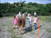 Outdoor-Abenteuer-Kinder-Geburtstage feiern mit Tieren (Lamas) in der Natur im Park an der Kinderburg in NRW