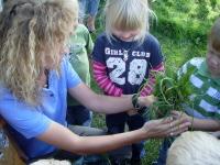 Kinder-Geburtstag mit Lamas hautnah: inklusive aus der Hand füttern (ab 4 Jahre)