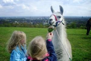 Lamas hautnah - Ein Tiererlebnis für Groß und Klein in NRW