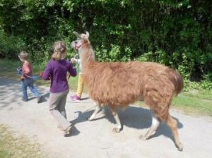 Gemeinsam mit Freunden oder der Familie mit einem Lama spazieren gehen, Foto Prachtlamas