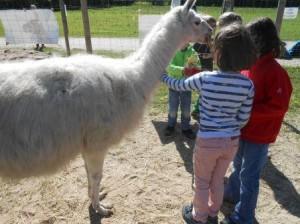 Kindergeburtstage mit Tieren - Lamas  - im Ruhrgebiet NRW