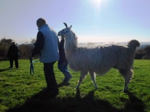 Lama-Wanderungen für die ganze Familie im Ruhrgebiet