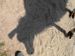 Begegnung mit dem Krafttier Lama - ein Erlebnisworkshop mit den Prachtlamas