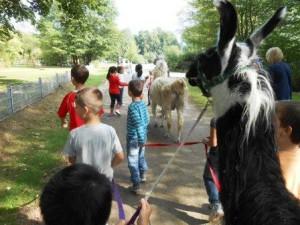 Ferien für Kinder mit Tieren (Lamas) in Gelsenkirchen / Essen, Ruhrgebiet, NRW. Foto: Prachtlamas