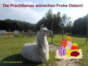 """Die Prachtlamas wünschen """"Frohe Ostern!"""". Auf dem Foto: Lama Dancer """"bewacht"""" seine Ostererier-Ausbeute :-)"""
