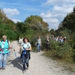 Mit Lamas unterwegs in NRW, Ruhrgebiet - im Goldenen Oktober, Foto: PrachtlamasLamawanderungen im Ruhrgebiet Halde Zollverein_Prachtlamas_Ausschnitt