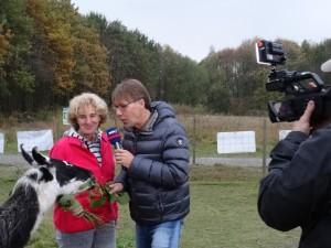 Endlich November! Live-Sendung im WDR-Fernsehen mit Beate Pracht und den Lamas im Ruhrgebiet, Allerheiligen um 15:30 Uhr
