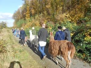Lamawanderung auf die Anden des Ruhrgebiets (Herbst)