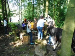 Mit Lamas Kinder-Geburtstag feiern - Tier-Erlebnis im Ruhrgebiet Gelsenkirchen Essen, Foto: Prachtlamas