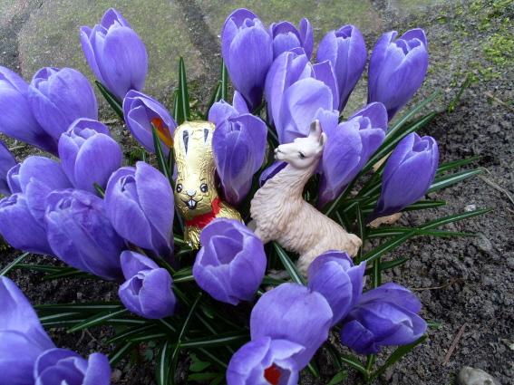 Die Prachtlamas wünschen frohe Ostern!