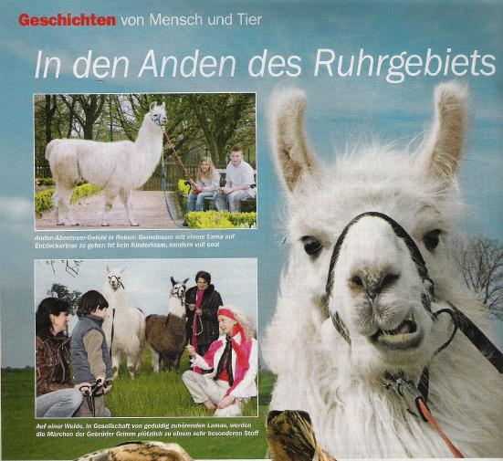 Ein Herz für Tiere berichtete im Mai 2009 über die Prachtlamas und andere Lamas im Ruhrgebiet