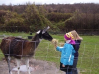 Kindergeburtstag bei den Lamas in Gelsenkirchen, Ruhrgebiet, NRW