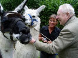 Lamas streicheln, füttern erleben - eine tiergestützte Therapie mit schnellen Erfolgen