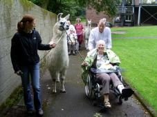Lamatherapie ist auch für Menschen im Rollstuhl geeignet.
