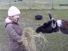Ein tierischer Ausflug für Familien, für Menschen mit und ohne Behinderungen und Alle am Weihnachtsmorgen