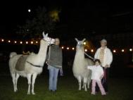Lamas Kasimir und Dancer bei der Dortmunder Museumsnacht 2009 auf Zeche