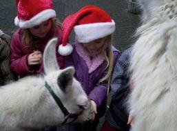 Die Prachtlamas wünschen Ihnen fröhliche und besinnliche Weihnachtsfeiertage und einen schönen Jahreswechsel!