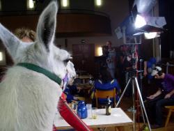 Filmprojekt für das ZDF mit den Pracht Lamas im Ruhrgebiet (für Ruhr.2010)