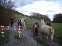Geburtstags-Kinder-Lama-Trekking mit den Prachtlamas im Ruhrgebiet auf die Rungenberghalde