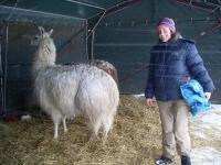 Die Lamas im Schneetreiben von Tief Daisy sind auf dem Hof topfit und von Beate Pracht gut versorgt.
