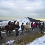 """Lamawanderung in Gelsenkirchen - ein Schulausflug auf die """"Anden des Ruhrgebiets"""""""