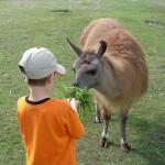 Das Prachtlamas-Ferienprogramm ist einzigartig im Ruhrgebiet!
