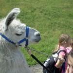Spiel, Spaß und Spannung beim Ferienprogramm mit Pracht Lamas