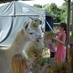 Kinder Erlebnis mit Tieren mit Lamas Kreativwerkstatt
