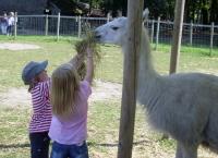 Kreativwerkstatt kleine Tierpflege und Naturschule in Ruhrgebiet, NRW, mit Lamas