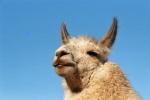 Ein tierische-gutes Ferienprogramm im Herzen des Ruhrgebiets