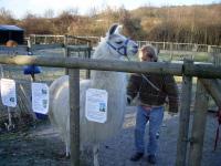 Lamas zu bürsten ist ein besonderes Erlebnis - nicht nur als Teil der Lamatherapie