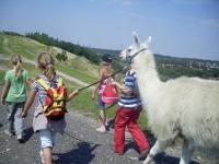 Die Kinder führen die Lamas gemeinsam im Team, hier im Bild: Lama Kasimir