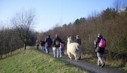 Lama Trekking im Ruhrgebiet 2010 - auch im Kulturhaupstadtjahr