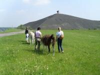Kleine Frühlings-Lama-Trekking-Tour auf die Rungenberghalde mitten in Gelsenkirchen-City