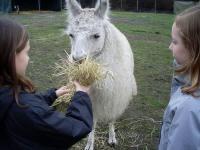 Mit Lamas Geburtstag feiern mitten im Ballungsraum Ruhrpott