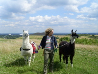Die Unternehmerin Beate Pracht bietet mit Prachtlamas Wanderungen mit Lamas an