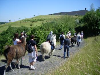 Prachtlamas Team Incentive ist ein tierisch-entspannendes Outdoor Seminar