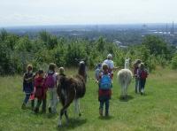 Kinder-Lama-Abenteuer in Gelsenkirchen bei den Prachtlamas 2010