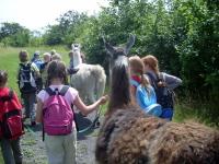 Eine Lama-Abenteuer-Wanderung ist ein Teil des Kinder-Ferienprogramms in Gelsenkirchen, Ruhrgebiet, NRW