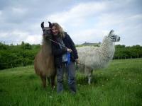 Lamas hautnah: hier Caruso und Dancer mit Bianca Witt