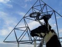 Ruhrgebiet-Extraschicht 2008: die Prachtlamas konnten am Tetraeder in Bottrop erlebt werden.