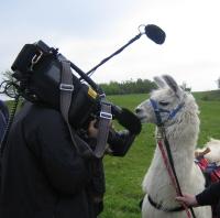 Pracht Lama Dancer bei Dreharbeiten vor TV Kamera