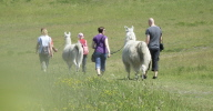 Ferien-Freizeit und Ausflüge für Kinder und Erwachsene mit Lamas