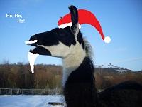 "Diego, das Weihnachtslama 2011, wünscht Ihnen: ""Ho, ho, ho!"""
