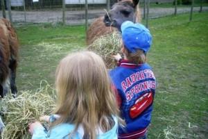Kinder Lama Erlebnis in Gelsenkirchen beim Prachtlamas e.V.