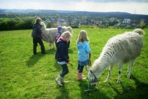Prachtlamas - Ferien - Abenteuer für Kinder mit Tieren