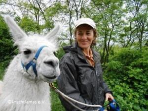 Lassen Sie sich von den Lamas im Herzen berühren!